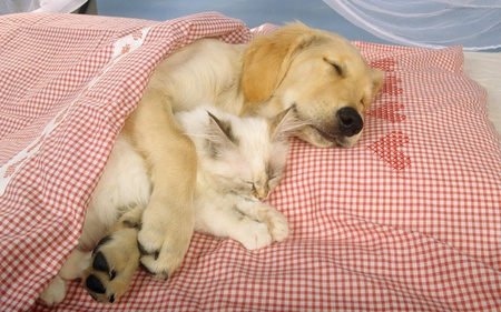 Comments On Cute Sleeping Friends Dogs Wallpaper Id 509186