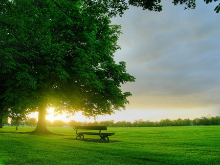 Good Morning to all - color, good morning, sun, morning, spring, sky, bench, green, trees, nature, tree