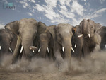 An elephant herd charging