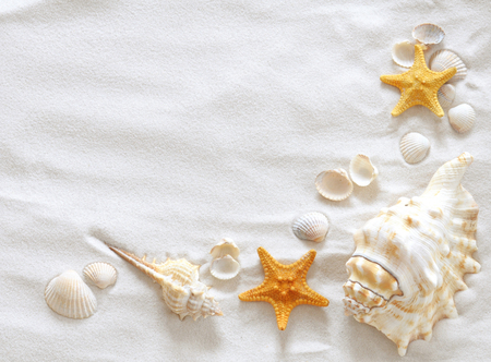 shells - beautiful, cool, stars, shells, nice, sand, sea