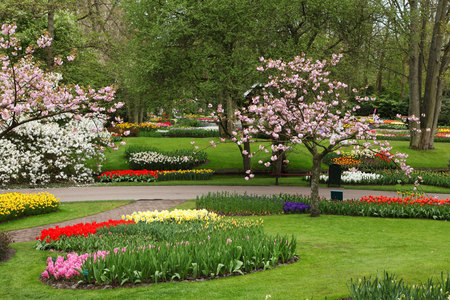 Flowers Garden - flowers, fullcolour, flowers garden, trees, beautiful, magnolia, spring, art photo, park