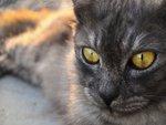 cat eye..