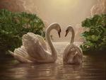 Swan-Lover