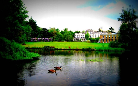 PEACEFUL LAKE - grass, buildings, trees, lake, geese, green, plants, garden, nature