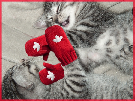 Kittens with red mittens - kittens, playful, red mittens, cute