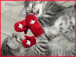 Kittens with red mittens