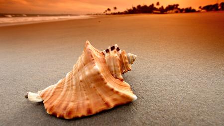 Seashell - seashell, ocean, view, beach, landscape