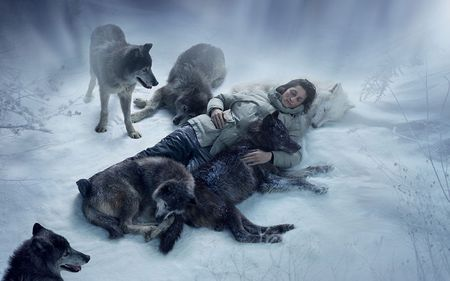 Act Of Kindness - lobo, survival, kindness, winter, cold, snow, ice, wolf, wolves, animals, frost