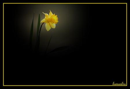 Beautiful yellow - beautiful yellow, flowers, beautiful flowers, single flower
