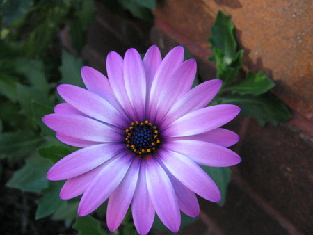 pretty purple flower, Beautiful flower