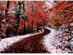 ROAD FROM AUTUM TO WINTER