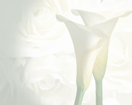 Wedding-Background - white, wedding, other, photo, background