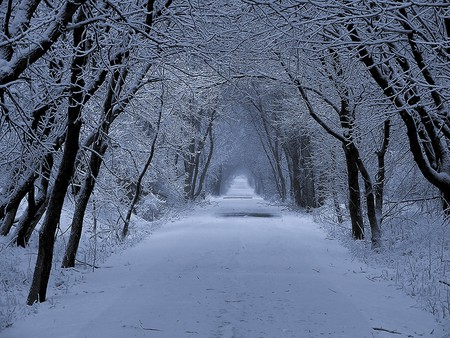 The Little White Road - snow, trail, winter, forest, road