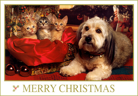christmas friends cats animals background wallpapers on desktop
