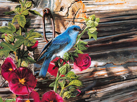 Singing Blue - red, lovely, beautiful, hook, singer, leaves, green, bird, holly hocks, logs, flowers, nature, ring, blue