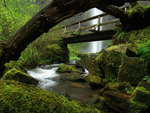 Bridge Waterfall