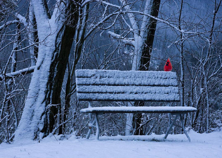 Winter cardinal winter nature background wallpapers on - Winter cardinal background ...