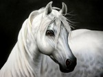 Andalusian Portrait