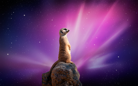 MEERKAT - meerkat, dlbdata, background, anaimal, abstract