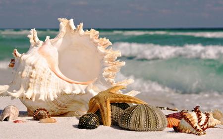 Seashells - seastar, seashells, oceans, sea
