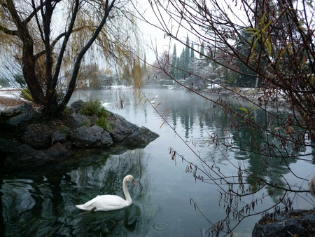 is cool ... the snow fall ...  but all is peaceful - beach, beatiful, oasis, snow, dezember, nature, lake, animal