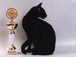Black cat with trophy