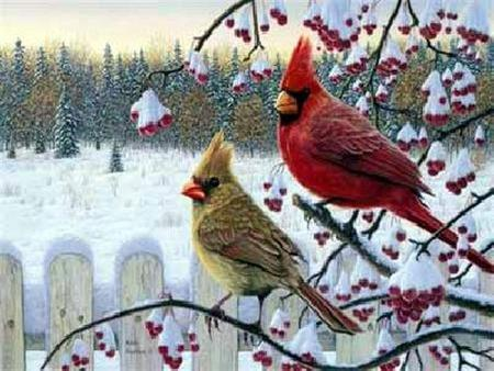 Beauty Of The Cardinal - birds, berries, cold, trees, male female, snow, winter, country, cardinals, field, conifers, fence