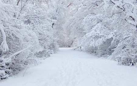 Beautiful Winter - beautiful, snow, white, winter, nature, trees, forests