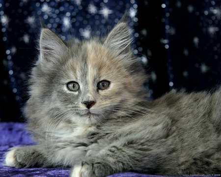 New year kitten - kitten, holiday, cat, new year