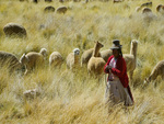 Peruvian Woman and Lamas