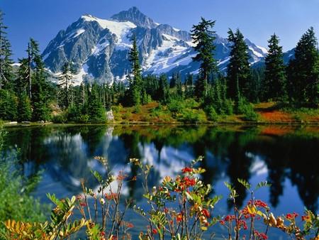 Mountain View - blue, lake, nature, mountain, flower