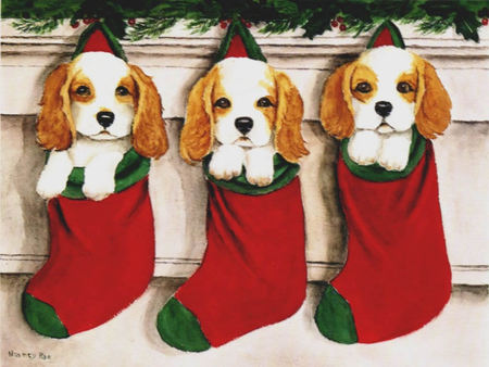 3dogs christmas - christmas, socks, dogs, ornament, animal