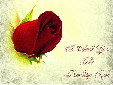 Friendship Rose from Monarch - red rose, friendship rose, dedication, friends