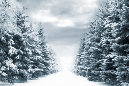 Winter - christmas, peaceful, white, winter time, magic, winter, landscape, sky, splendor, merry christmas, mountains, nature, trees, beauty, beautiful, lovely, snow, clouds
