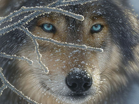 ice blue wolf - ice, nature, wolf