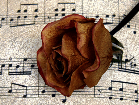 Music for Rose - beautiful, music, romance, rose