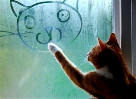 Cat Artist Cats Animals Background Wallpapers On Desktop Nexus