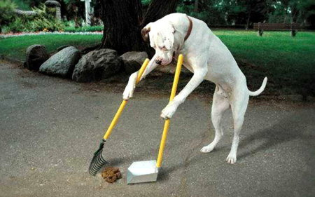 NICE  DOG - cool, cleaning, animal, dog
