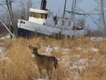 A doe and a boat