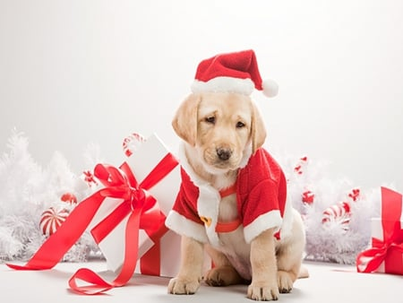 Cute Puppy , Dogs \u0026 Animals Background Wallpapers on Desktop