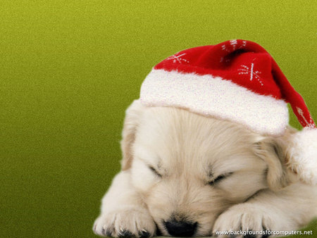 Puppy Christmas , Dogs \u0026 Animals Background Wallpapers on