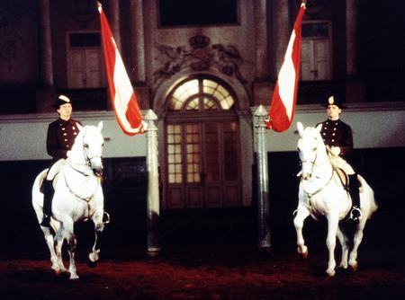 Vienna Horseriding School - stallions, horses, animals, austria, vienna, spanish horses, lippizzan horses