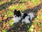 Autumn Snoopy
