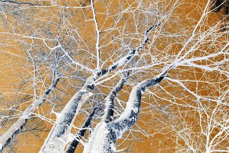 RamiSpogli - BareBranches - forest, bare, tree, leafless, branch