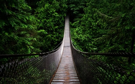 DEEP FOREST BRIDGE - image, nice, multicolor, billet, path, paisage, wood, guard-rail, compu, balustrade, die, fencing, wooden, hd, long, beautiful, draw, leaves, bridge, green, destination, scenery, handrail, forest, suspension, paisagem, dark, nature, branches, pc, scene, wire mesh, banisters, high definition, birch, dole, cenario, destiny, scenario, jungle, boards, forests, paysage, cena, black, braided screen, trees, abstract, panorama, doom, timber, weirdy, cool, rail, awesome, wire, photoshop, whither, landscape, hap, fate, colorful, gray, burden, trunks, picture, photography, future, darkness, grove, screen saver, amazing, photo, multi-coloured, view, colors, raft, lot, leaf, lines, colours, portion, natural