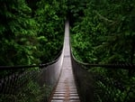 DEEP FOREST BRIDGE