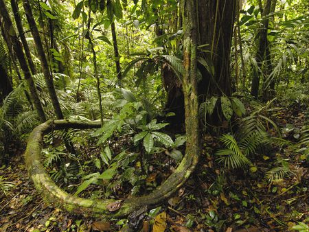Amazon jungle - rainforest, amazon, jungle, nature