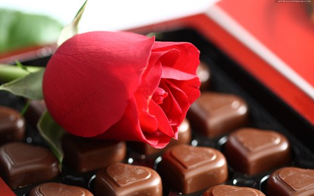 rose & chocolate for mememe1 - beautiful, chocolate, rose, red, box