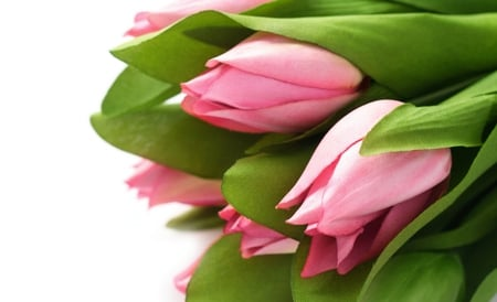 Pink Tulips - pretty, lovely, colors, beautiful, pink tulips, photography, green, flowers, beauty, nature, tulips, pink, tulip