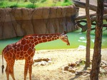 Day @ The Zoo